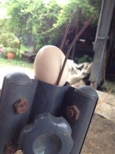 260815シャモミちゃんの卵
